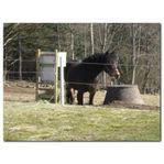 Foderautomat Lunchbox original för Hästar