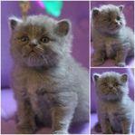 5 Underbara kattungar letar nytt hem