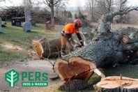 Trädfällning & Stubbfräsning