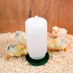 Vattenautomater till kycklingar och vaktlar