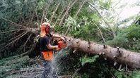 Trädfällning hela Skåne