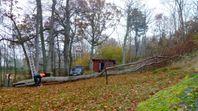 Svårplacerade träd på tomten