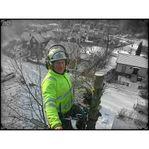Trädfällning, beskärning -50% med Rut-avdrag
